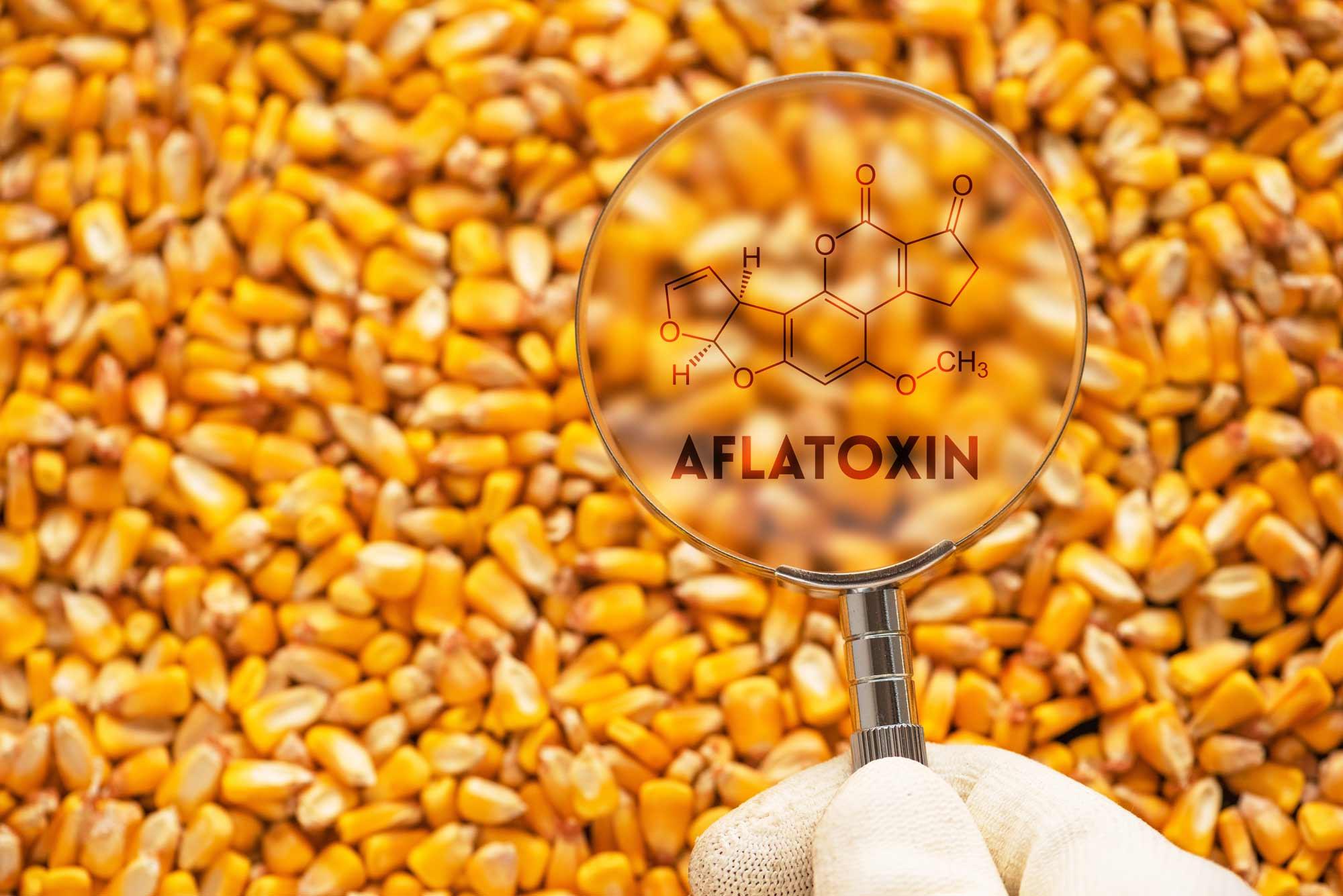 chandler-analytical-laboratories-aflatoxin-testing
